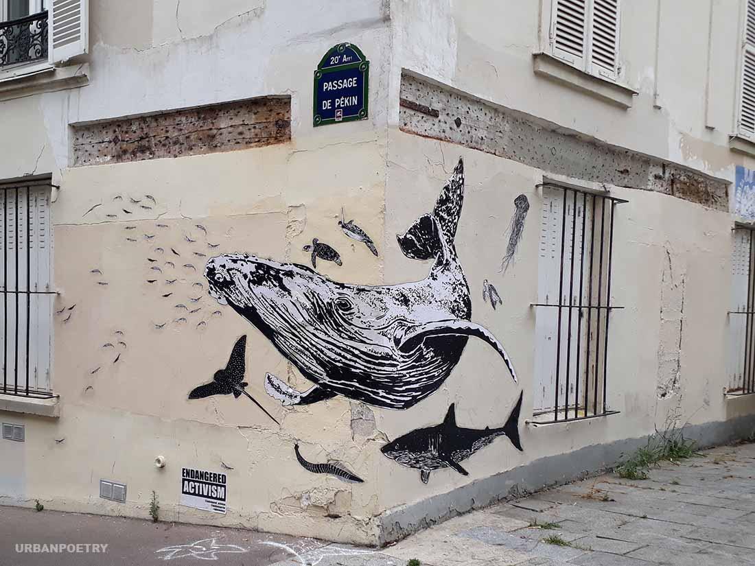 baleine endagered activism