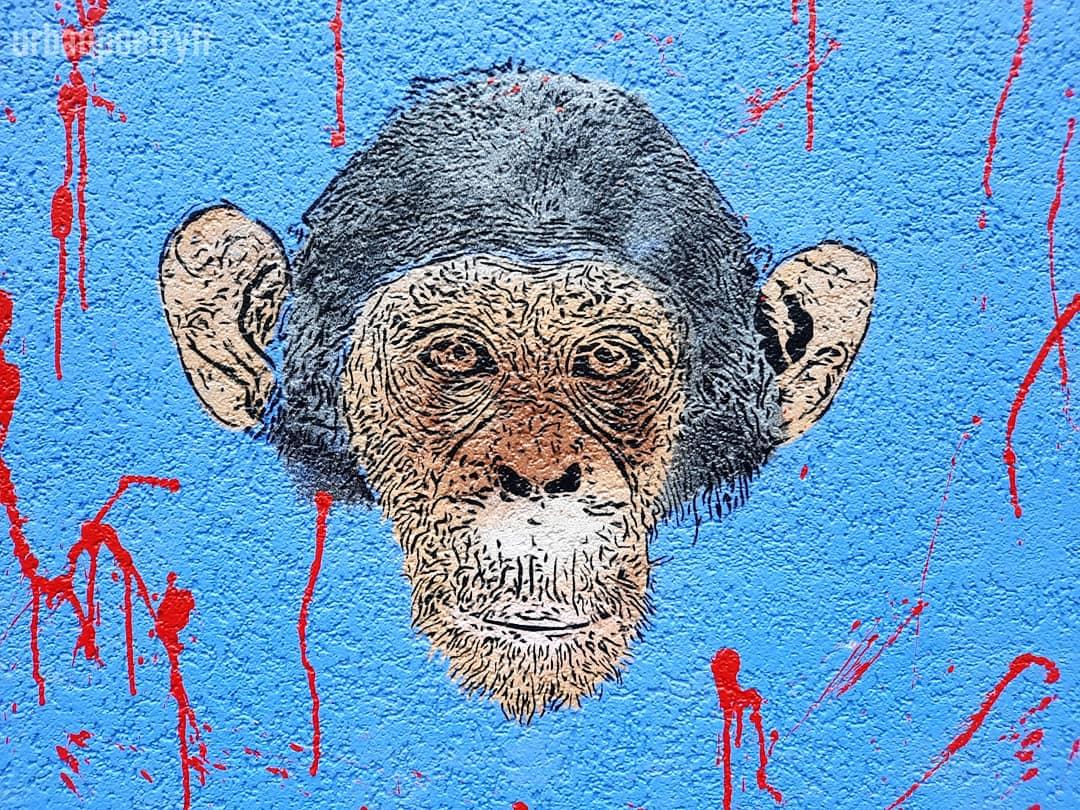 singe street art urban poetry